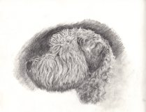 Curly Haired Dog by Alice M Hill